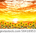 Sunflowers line up in front of the sunset 56416953