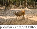 กวาง,สัตว์,สัตว์ต่างๆ 56419022