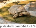 Land turtle in the zoo 56419374