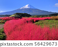 Oishi Park-777033的風景 56429673