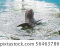 Dolphin in the aquarium underwater show. 56463786
