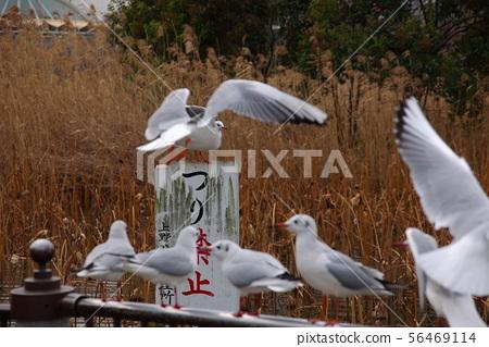 Seagull 3 56469114