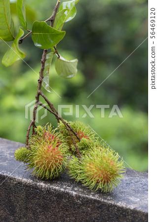 Fresh rambutan on natural background 56469120