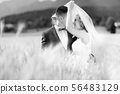 Groom hugs bride tenderly while wind blows her veil in wheat field somewhere in Slovenian 56483129