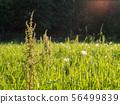 Green hay field in summer 56499839
