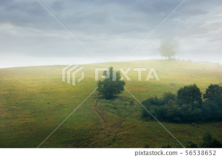 trees on the hill in fog 56538652