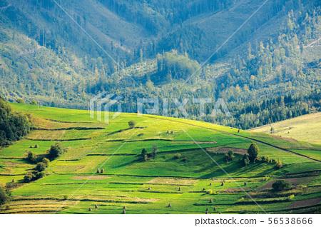 beautiful rural area of carpathian mountains 56538666