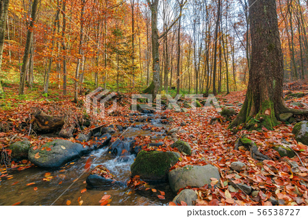 brook among the rock in autumn forest 56538727