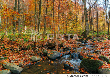 brook among the rock in autumn forest 56538729