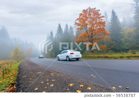 new asphalt road through forest in fog 56538787