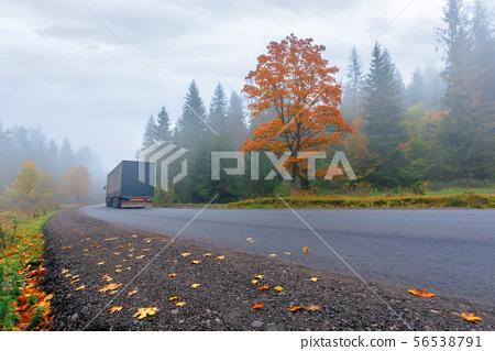 new asphalt road through forest in fog 56538791