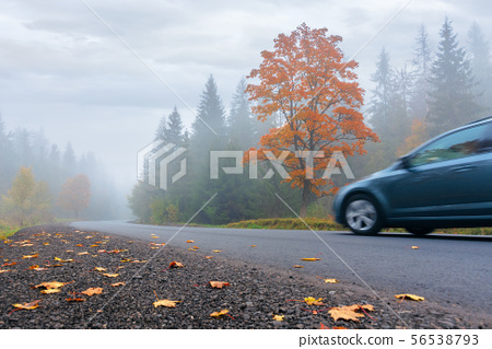 new asphalt road through forest in fog 56538793