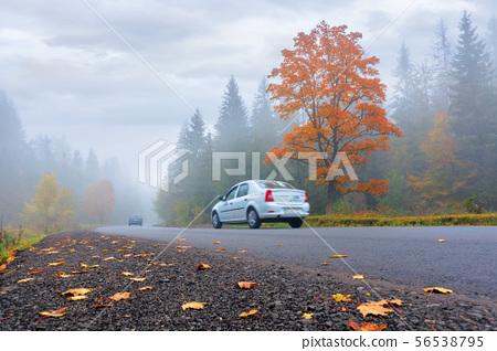 new asphalt road through forest in fog 56538795
