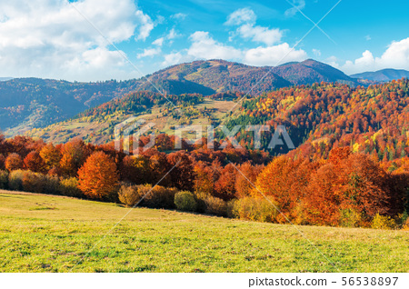 wonderful autumn afternoon in mountains 56538897