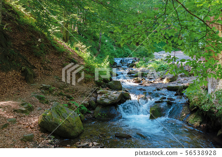 brook among the rock in summer forest 56538928