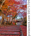 毘沙門堂의 단풍과 흩어져 단풍 나무 56573704