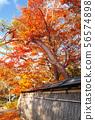 교토 단풍의 명소 천룡 절의 보물 엄 원 단풍과 일본 정원 56574898