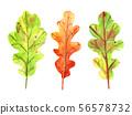 Watercolor autumn set with oak leaves. 56578732