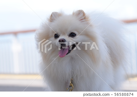 A smiling dog with a sea background 56580874