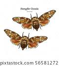 Platypleura kaempferi cicada, hand draw sketch 56581272