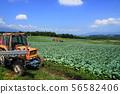 8 월 嬬恋 마을 15 양배추 밭 애처의 언덕 嬬恋 파노라마 선 56582406