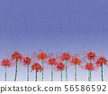 Cluster amaryllis and night sky 56586592