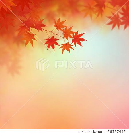 พื้นหลัง - สไตล์ญี่ปุ่น - ญี่ปุ่น - แบบญี่ปุ่น - กระดาษญี่ปุ่น - ใบไม้เปลี่ยนสี - ฤดูใบไม้ร่วง - ไล่เฉดสี 56587445