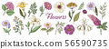 Hand drawn flowers. Floral vintage bouquet, garden flower set for posters and wedding cards. Vector 56590735
