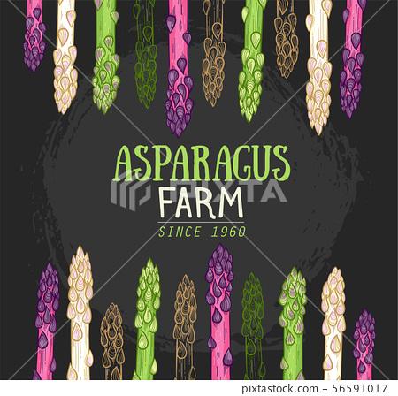 Organic asparagus farm hand drawn 56591017