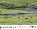 grazing 56592958