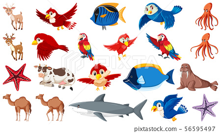Set of different types of sea animals and birds 56595497