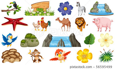 Set of animals and plants 56595499