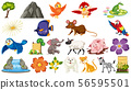 Set of different wild animals 56595501