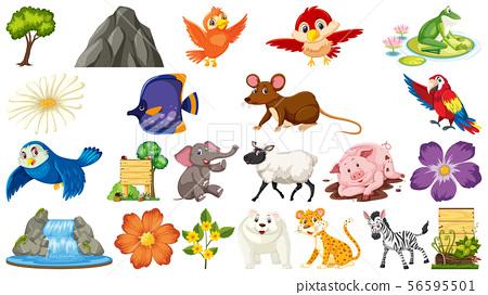 Set of different wild animals 56595501