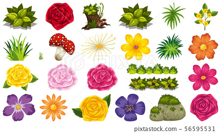 Set of isolated objects theme - flowers 56595531