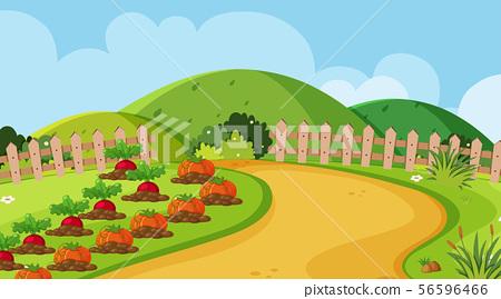 Background design of landscape with vegetable 56596466