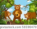 Honey bears in jungle scene 56596470