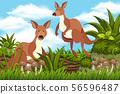 Kangaroos in nature background 56596487