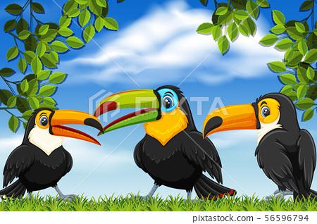 Toucans in nature scenes 56596794
