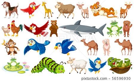 Set of many wild animals 56596930