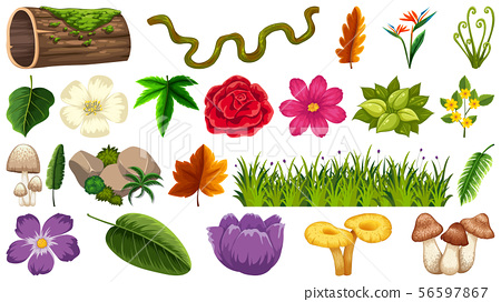 Set of different nature elements 56597867