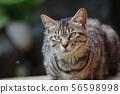 보다는 눈의 고양이 56598998