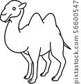 camel 56600547