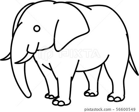 elephant 56600549