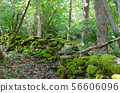 Old moss covered dry stone wall in a forest 56606096