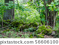 Old moss covered dry stone wall in a lush greenery 56606100