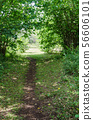 Cattle path in lush greenery in the countryside 56606101
