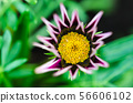 Beautiful flower head close up 56606102