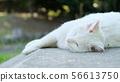 고양이 풍경 56613750