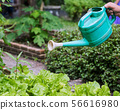 Water organic vegetable by plastic can 56616980